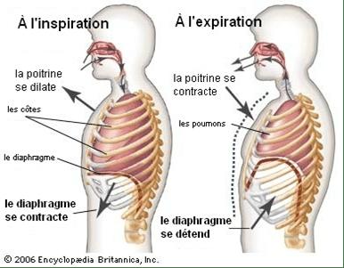 éliminez la constipation grâce à l'ostéopathie Julien Moreno Ostéopathe D.O. Montpellier centre